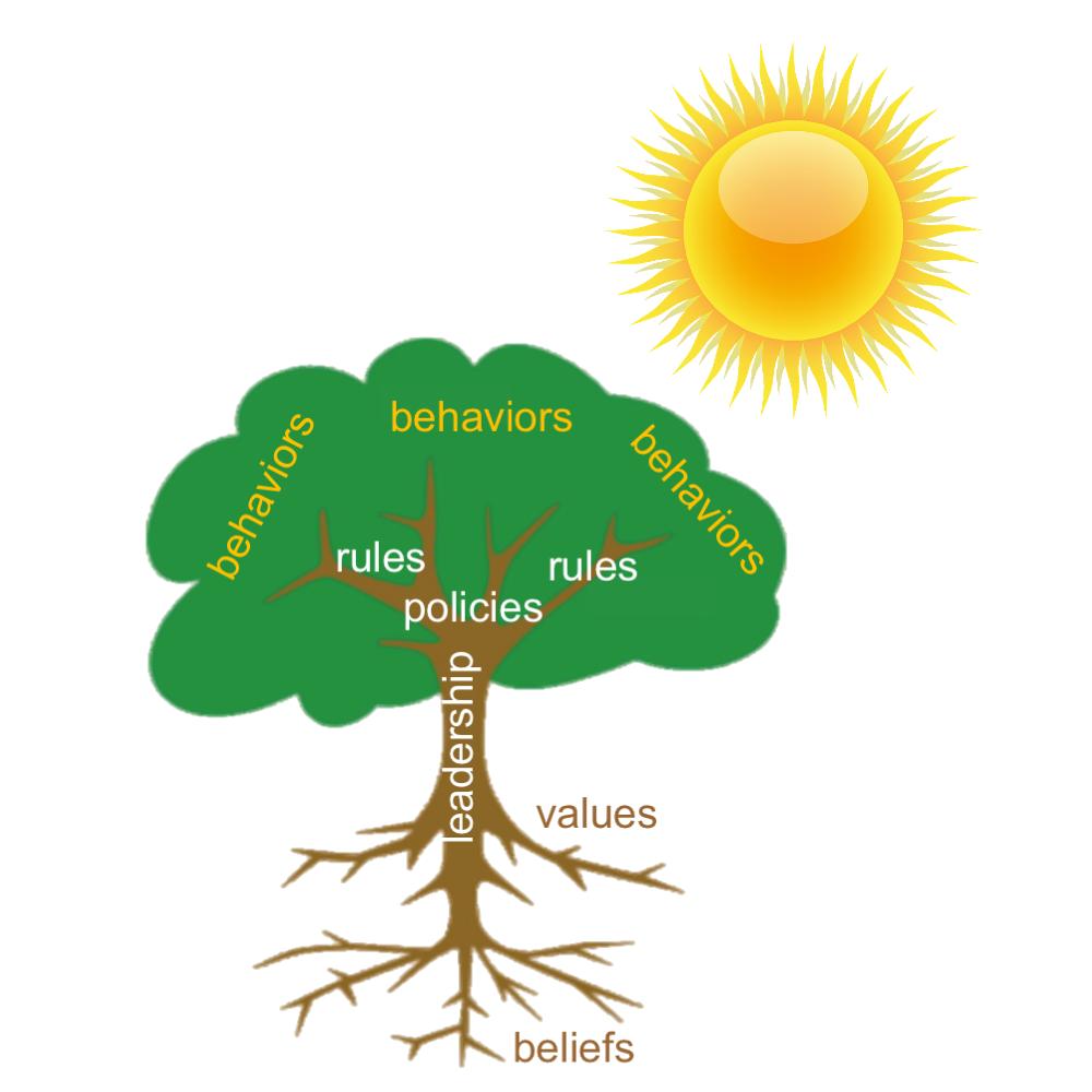 Sunshine fuels behaviors
